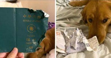 गजब : कुत्ते ने पासपोर्ट फाड़कर बचाई मालिक की जान
